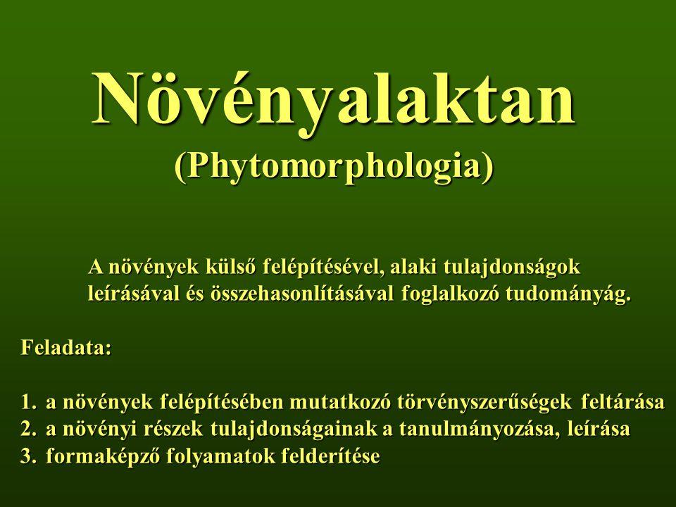 Növényalaktan (Phytomorphologia) A növények külső felépítésével, alaki tulajdonságok leírásával és összehasonlításával foglalkozó tudományág.