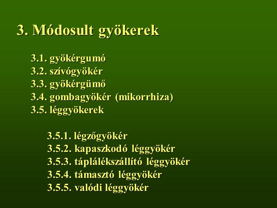 3. Módosult gyökerek 3.1. gyökérgumó 3.2. szívógyökér 3.3. gyökérgümő 3.4. gombagyökér (mikorrhiza) 3.5. léggyökerek 3.5.1. légzőgyökér 3.5.2. kapaszk