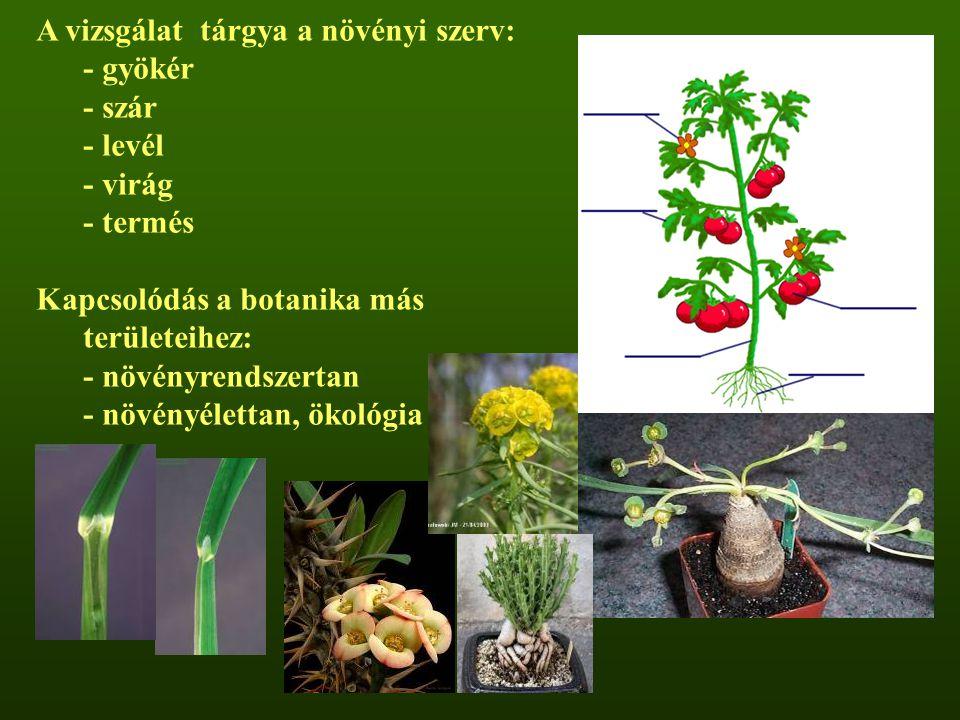 A vizsgálat tárgya a növényi szerv: - gyökér - szár - levél - virág - termés Kapcsolódás a botanika más területeihez: - növényrendszertan - növényélet