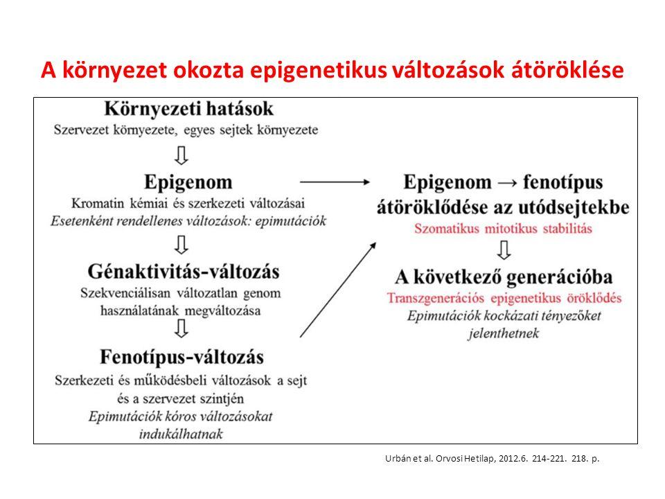 A környezet okozta epigenetikus változások átöröklése Urbán et al.