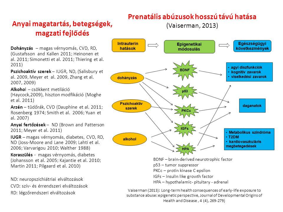 Anyai magatartás, betegségek, magzati fejlődés Dohányzás – magas vérnyomás, CVD, RD, (Gustafsson and Kallen 2011; Heinonen et al.