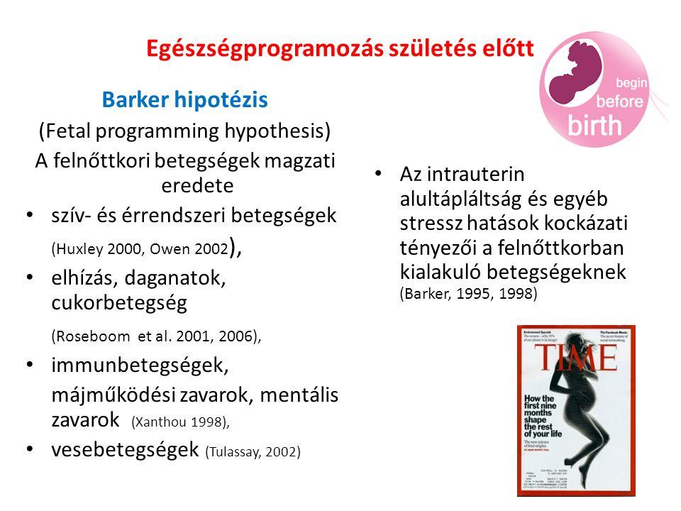 Egészségprogramozás születés előtt Barker hipotézis (Fetal programming hypothesis) A felnőttkori betegségek magzati eredete szív- és érrendszeri betegségek (Huxley 2000, Owen 2002 ), elhízás, daganatok, cukorbetegség (Roseboom et al.