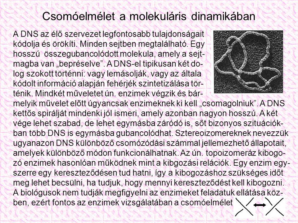 Csomóelmélet a molekuláris dinamikában A DNS az élő szervezet legfontosabb tulajdonságait kódolja és örökíti.