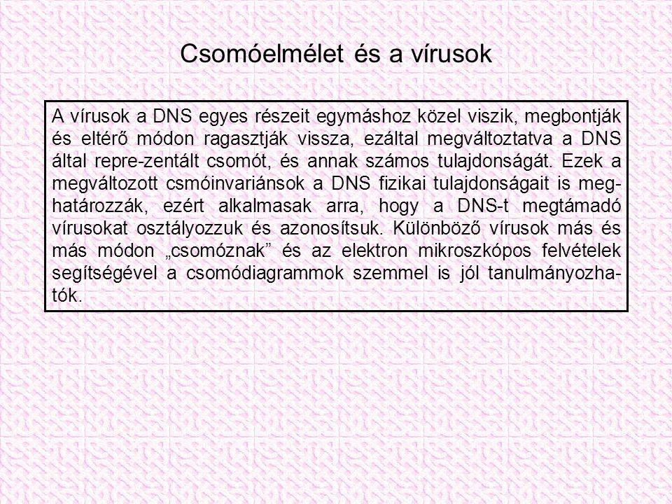 Csomóelmélet és a vírusok A vírusok a DNS egyes részeit egymáshoz közel viszik, megbontják és eltérő módon ragasztják vissza, ezáltal megváltoztatva a DNS által repre-zentált csomót, és annak számos tulajdonságát.