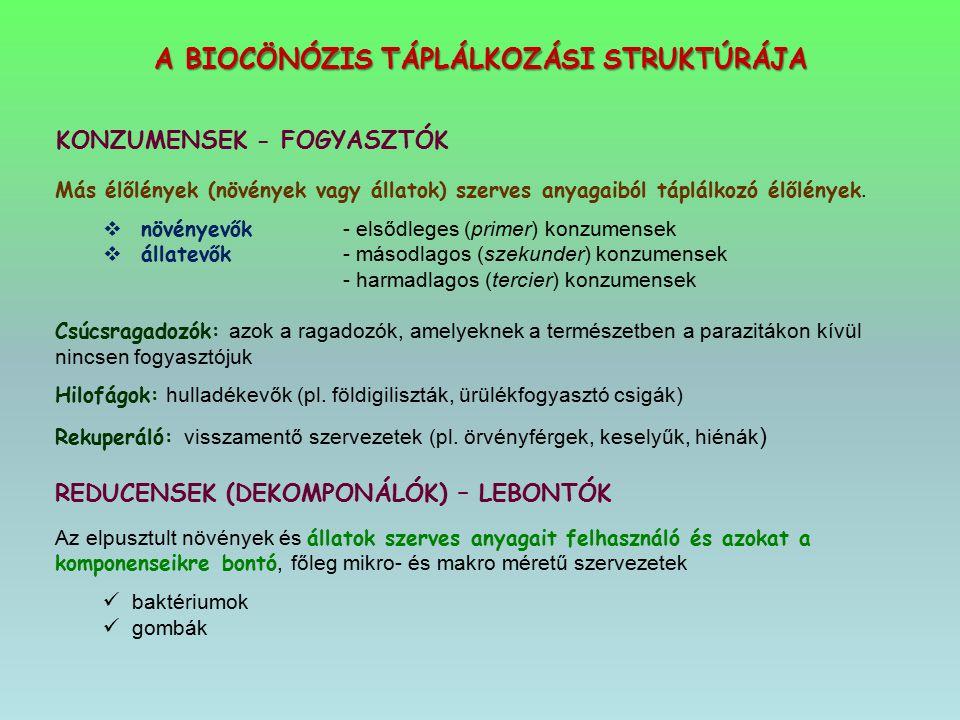 A BIOCÖNÓZIS TÁPLÁLKOZÁSI STRUKTÚRÁJA KONZUMENSEK - FOGYASZTÓK Más élőlények (növények vagy állatok) szerves anyagaiból táplálkozó élőlények.  növény