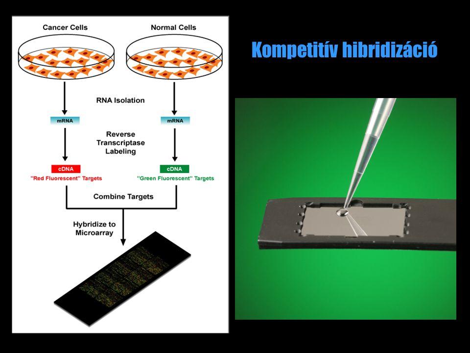 Kompetitív hibridizáció