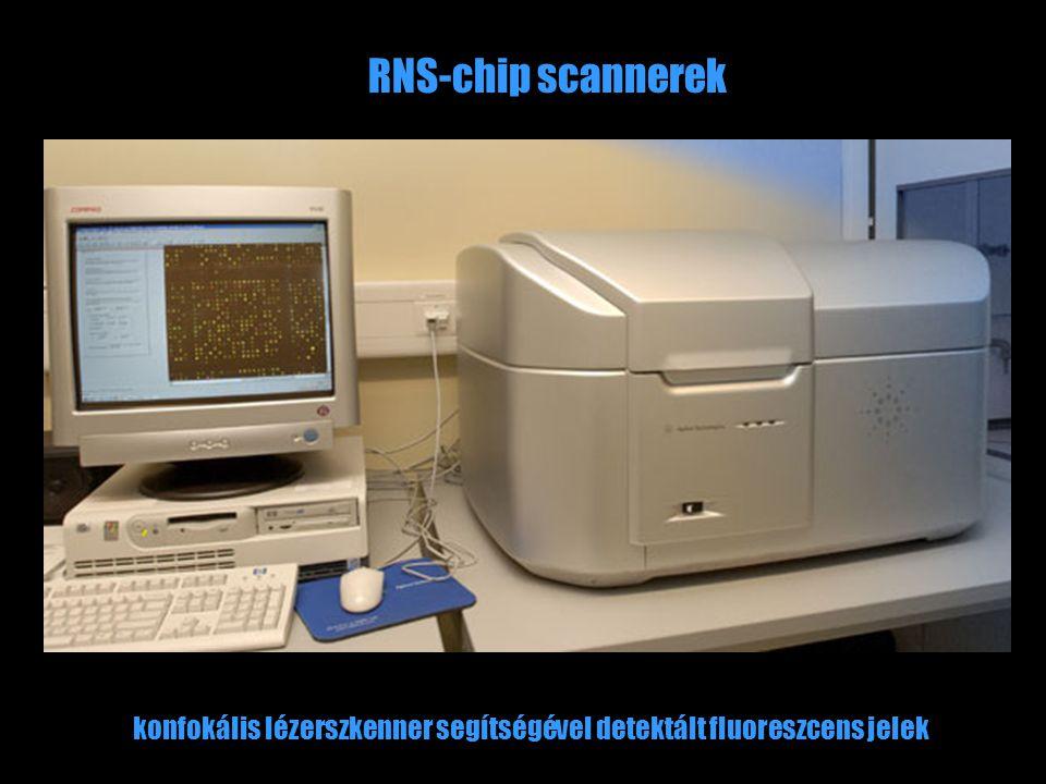 RNS-chip scannerek konfokális lézerszkenner segítségével detektált fluoreszcens jelek