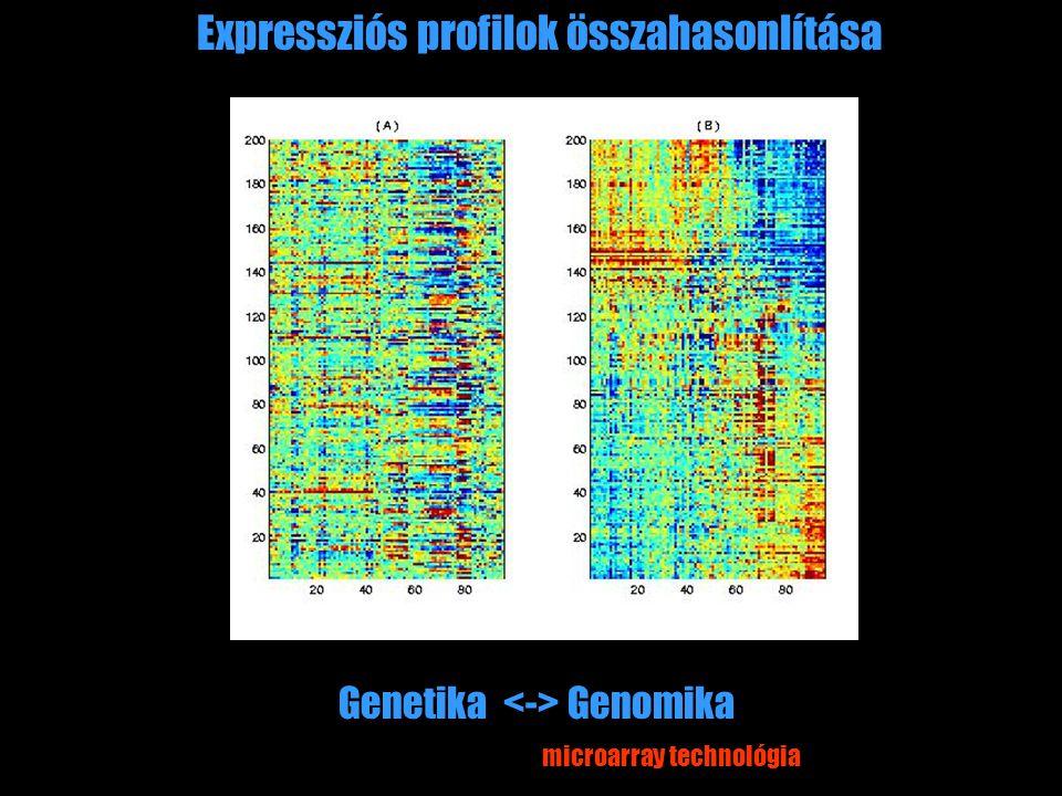 Expressziós profilok összahasonlítása Genetika Genomika microarray technológia