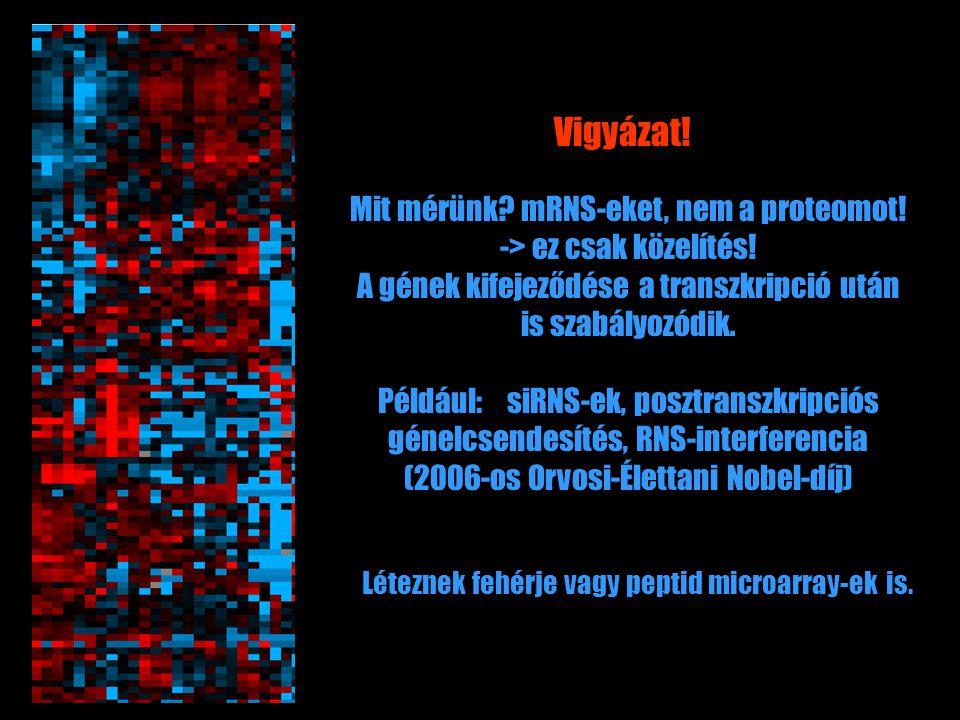 Mit mérünk? mRNS-eket, nem a proteomot! -> ez csak közelítés! A gének kifejeződése a transzkripció után is szabályozódik. Például: siRNS-ek, posztrans