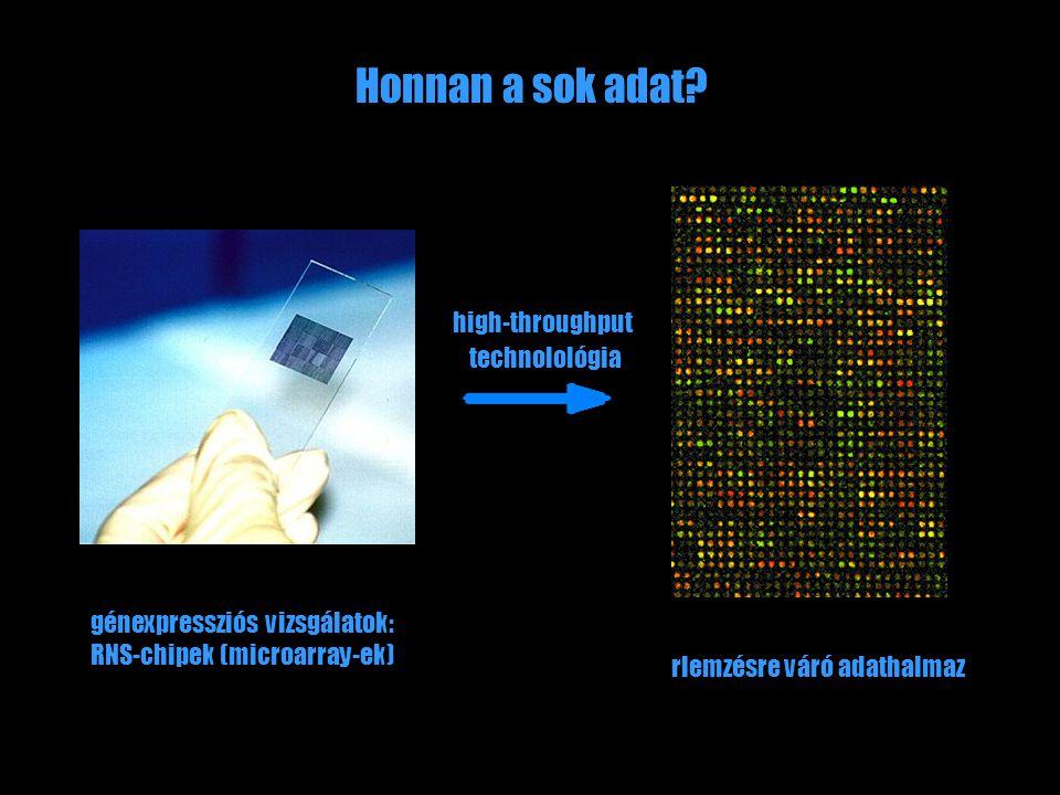 Honnan a sok adat? high-throughput technolológia génexpressziós vizsgálatok: RNS-chipek (microarray-ek) rlemzésre váró adathalmaz