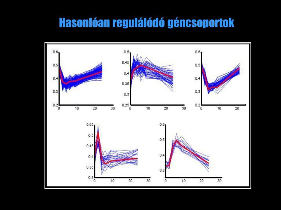Hasonlóan regulálódó géncsoportok