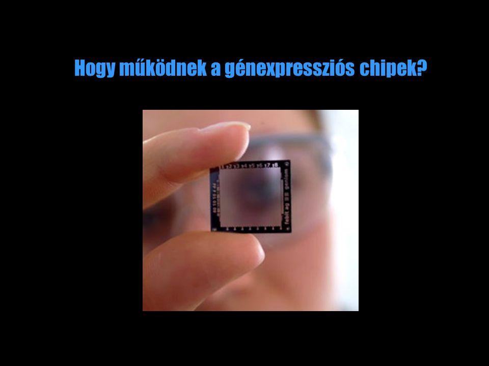 Hogy működnek a génexpressziós chipek