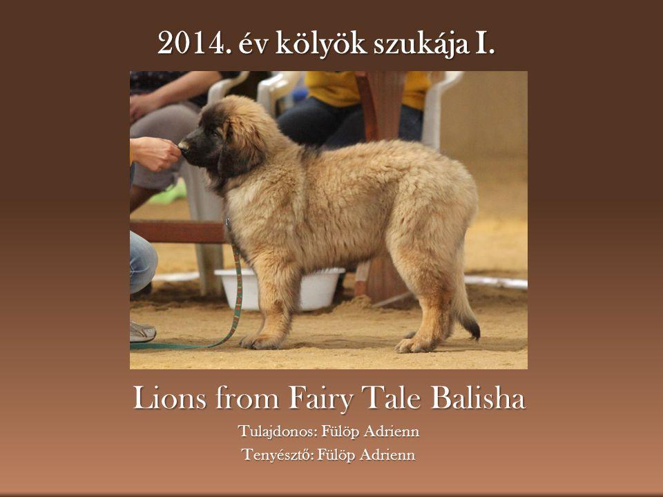 2014. év kölyök szukája I. Lions from Fairy Tale Balisha Tulajdonos: Fülöp Adrienn Tenyészt ő : Fülöp Adrienn
