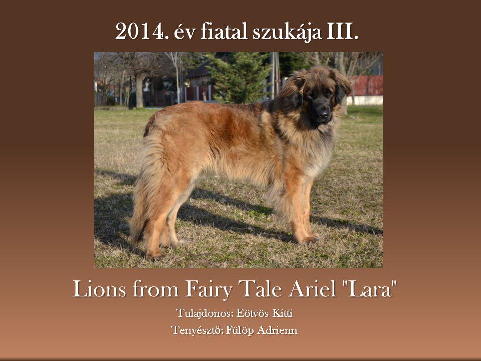 2014. év fiatal szukája III. Lions from Fairy Tale Ariel
