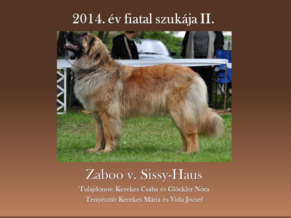 2014.év fiatal szukája II. Zaboo v.