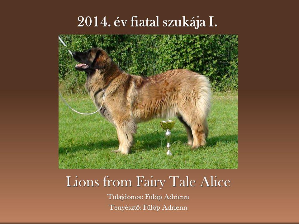 2014. év fiatal szukája I. Lions from Fairy Tale Alice Tulajdonos: Fülöp Adrienn Tenyészt ő : Fülöp Adrienn