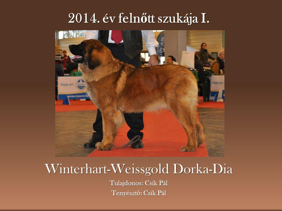 2014. év feln ő tt szukája I. Winterhart-Weissgold Dorka-Dia Tulajdonos: Csík Pál Tenyészt ő : Csík Pál