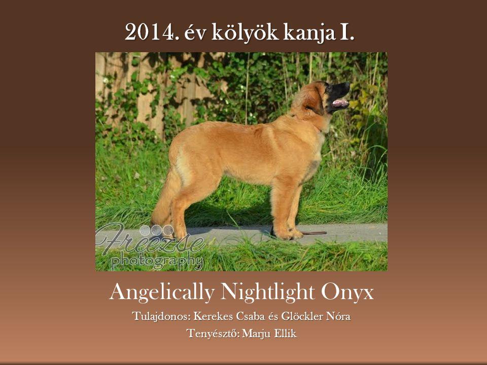 2014. év kölyök kanja I. Angelically Nightlight Onyx Tulajdonos: Kerekes Csaba és Glöckler Nóra Tenyészt ő : Marju Ellik