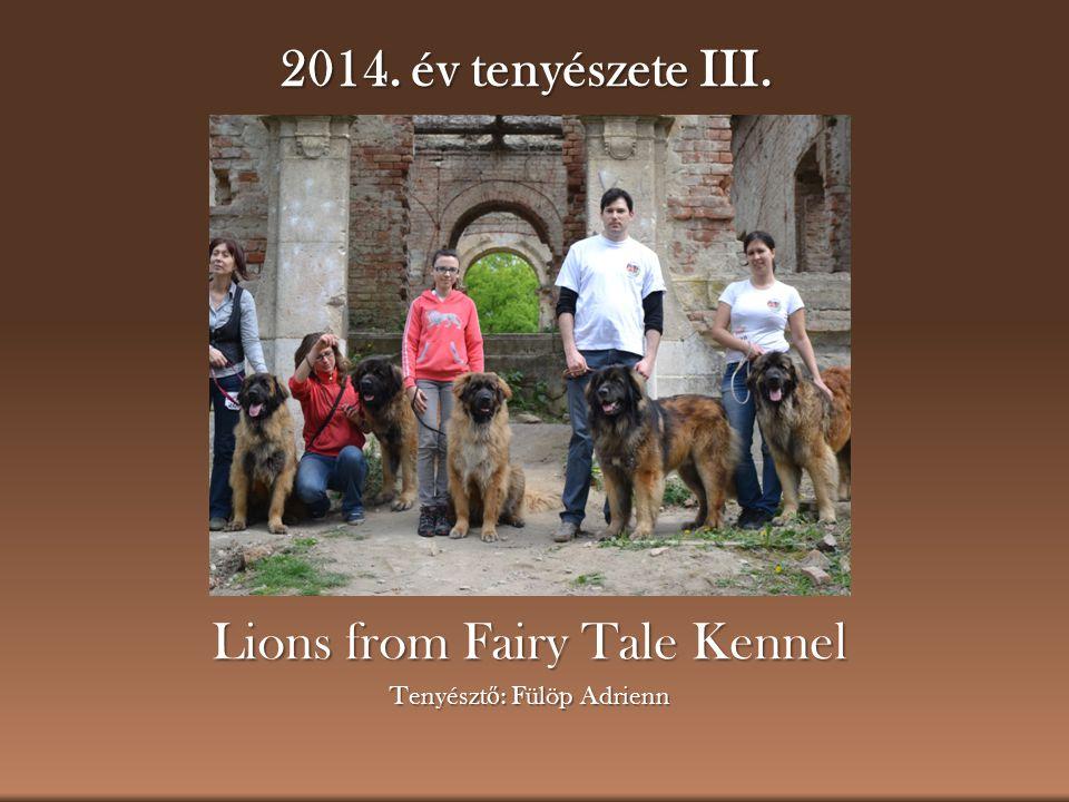 2014. év tenyészete III. Lions from Fairy Tale Kennel Tenyészt ő : Fülöp Adrienn