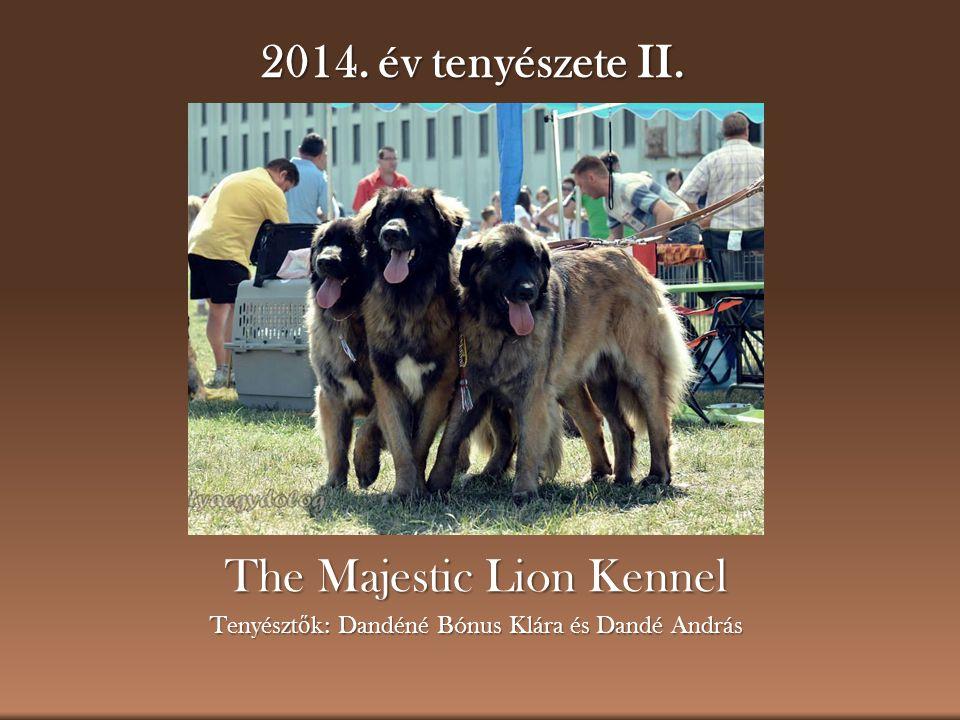 2014. év tenyészete II. The Majestic Lion Kennel Tenyészt ő k: Dandéné Bónus Klára és Dandé András