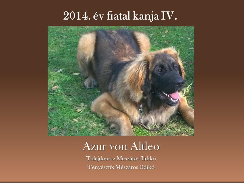 2014. év fiatal kanja IV. Azur von Altleo Tulajdonos: Mészáros Ildikó Tenyészt ő : Mészáros Ildikó