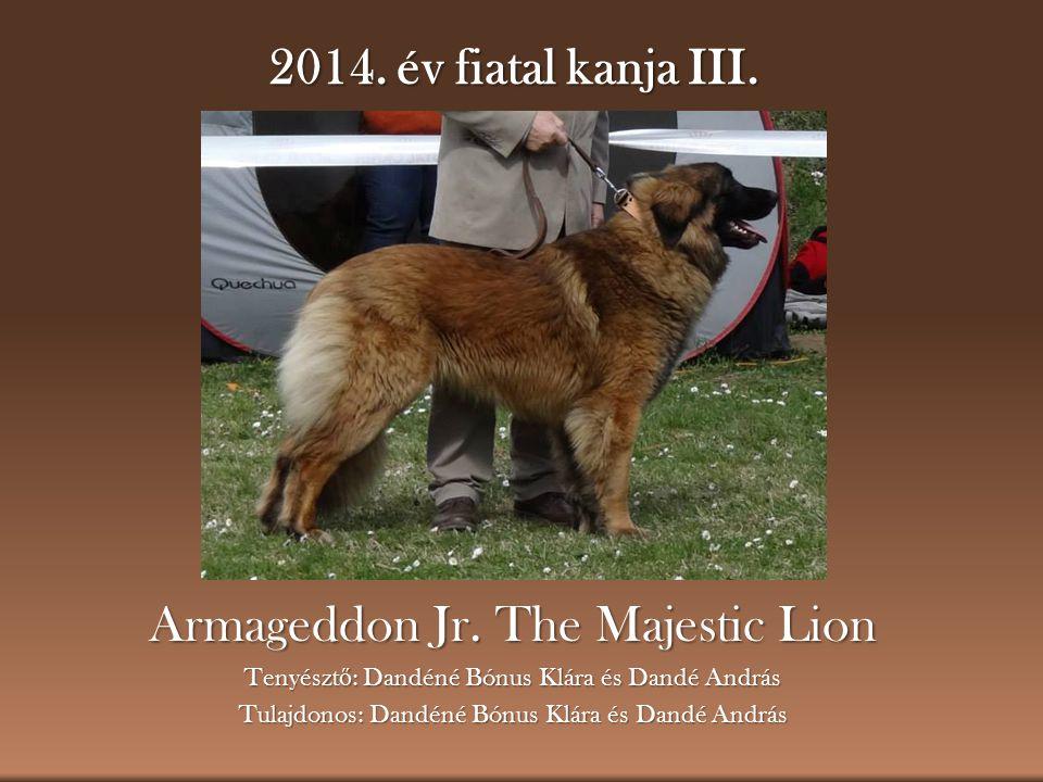 2014. év fiatal kanja III. Armageddon Jr. The Majestic Lion Tenyészt ő : Dandéné Bónus Klára és Dandé András Tulajdonos: Dandéné Bónus Klára és Dandé