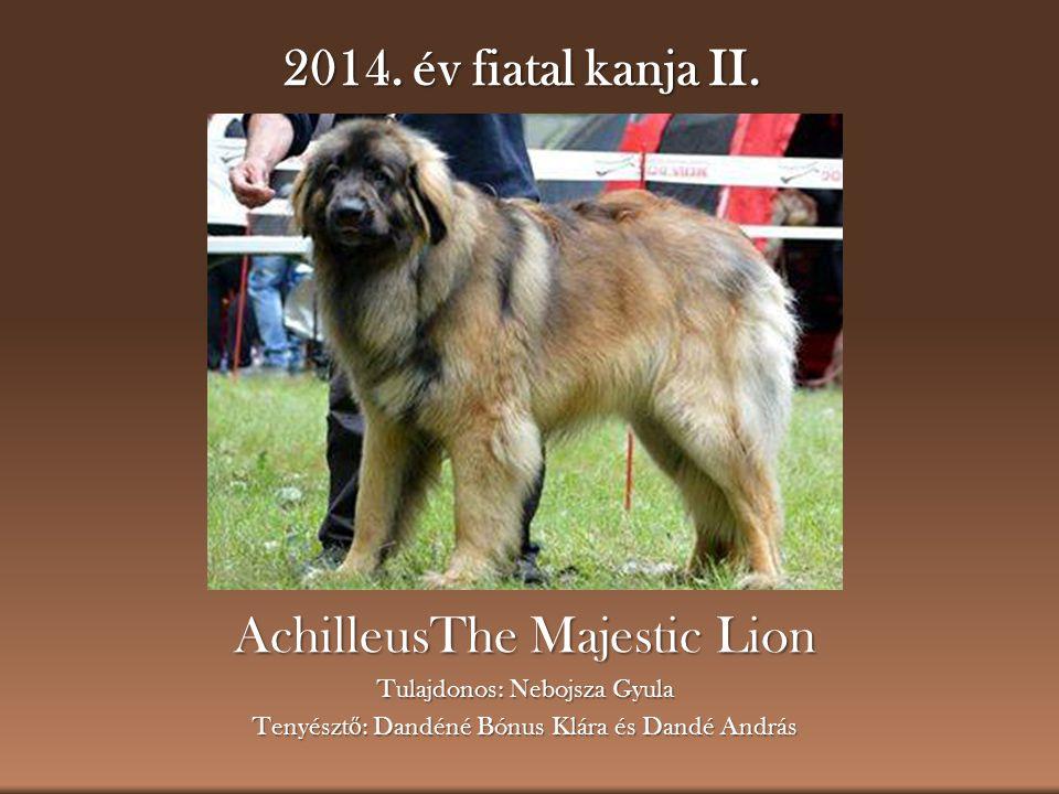 2014. év fiatal kanja II. AchilleusThe Majestic Lion Tulajdonos: Nebojsza Gyula Tenyészt ő : Dandéné Bónus Klára és Dandé András