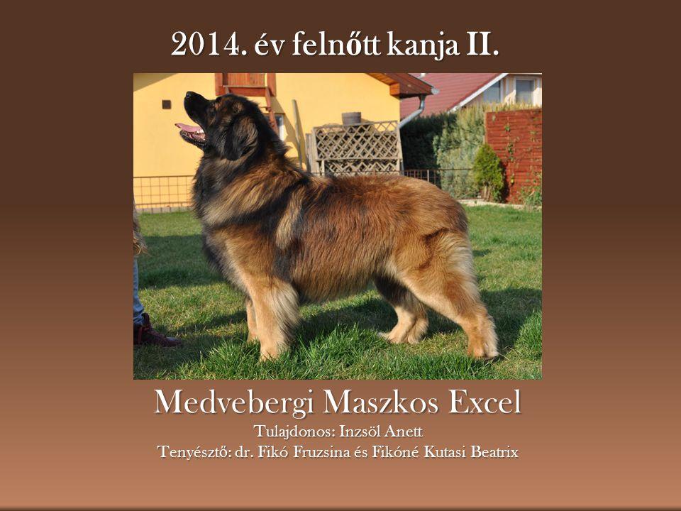 2014.év feln ő tt kanja II. Medvebergi Maszkos Excel Tulajdonos: Inzsöl Anett Tenyészt ő : dr.