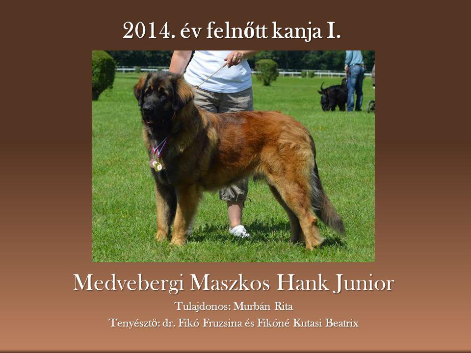 2014.év feln ő tt kanja I. Medvebergi Maszkos Hank Junior Tulajdonos: Murbán Rita Tenyészt ő : dr.