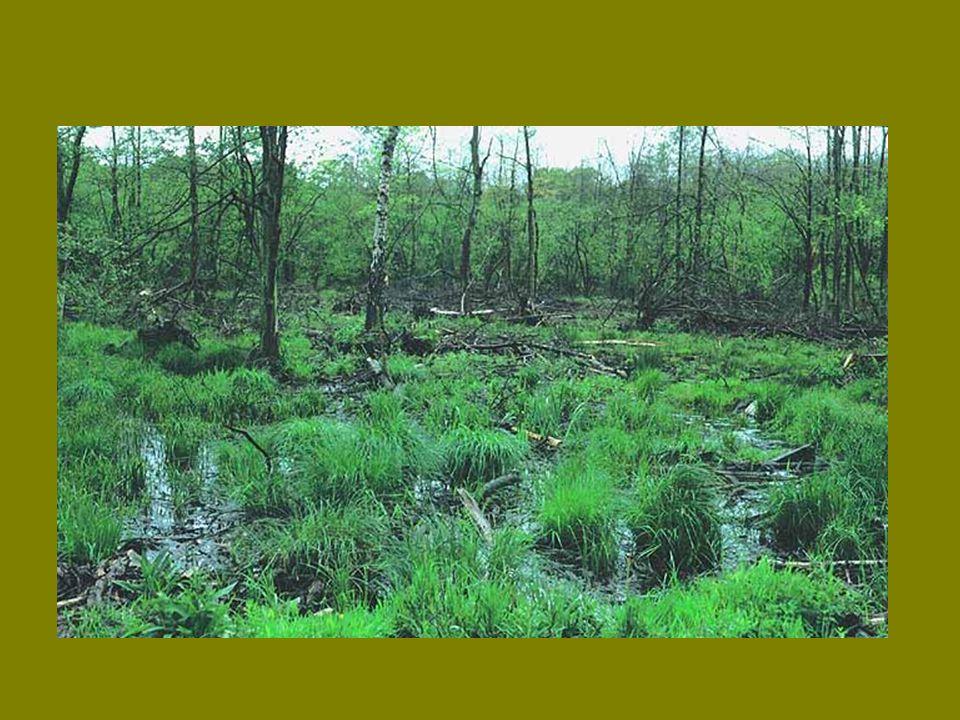 """A természetvédelem részéről """"újonnan felfedezett élőhelyek iszapnövényzet pionír társulások szegetális gyomnövényzet kultúrreliktumok"""