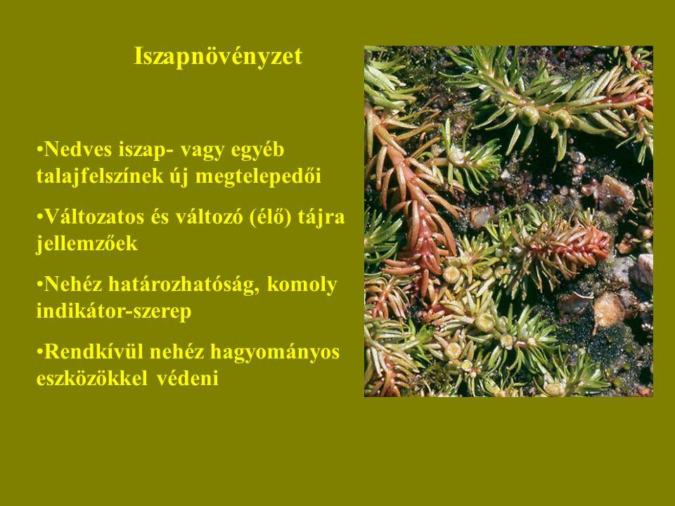 Iszapnövényzet Nedves iszap- vagy egyéb talajfelszínek új megtelepedői Változatos és változó (élő) tájra jellemzőek Nehéz határozhatóság, komoly indikátor-szerep Rendkívül nehéz hagyományos eszközökkel védeni