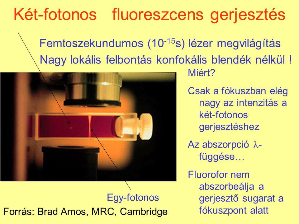Két-fotonos és konfokális (lézer pásztázó fluoreszcens) mikroszkópia összehasonlítása 3  m-es minta- mélység két-fotonoskonfokális Forrás: Wisconsin University