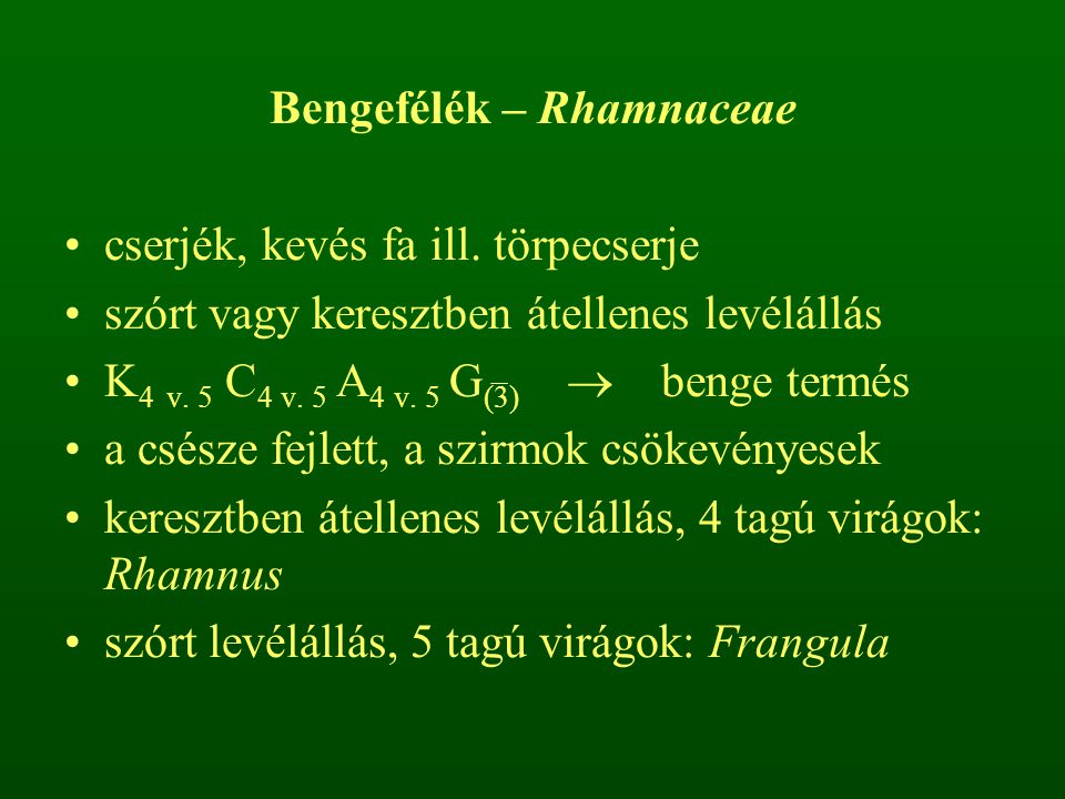 Bengefélék – Rhamnaceae cserjék, kevés fa ill. törpecserje szórt vagy keresztben átellenes levélállás K 4 v. 5 C 4 v. 5 A 4 v. 5 G (3)  benge termés