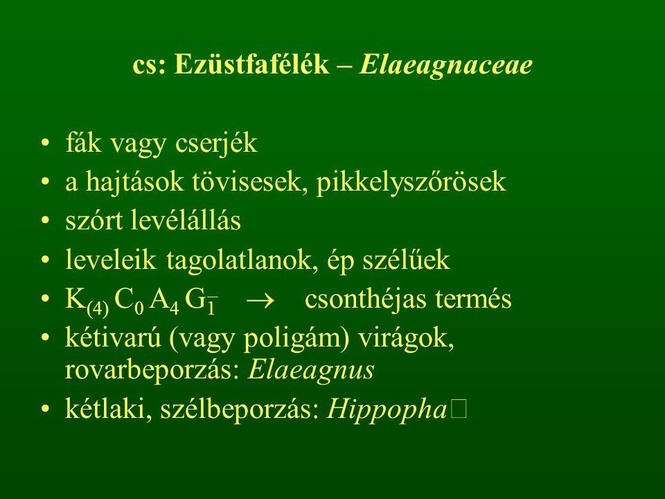 cs: Ezüstfafélék – Elaeagnaceae fák vagy cserjék a hajtások tövisesek, pikkelyszőrösek szórt levélállás leveleik tagolatlanok, ép szélűek K (4) C 0 A 4 G 1  csonthéjas termés kétivarú (vagy poligám) virágok, rovarbeporzás: Elaeagnus kétlaki, szélbeporzás: Hippopha 
