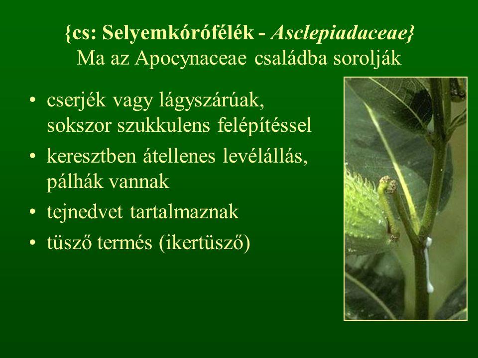 {cs: Selyemkórófélék - Asclepiadaceae} Ma az Apocynaceae családba sorolják cserjék vagy lágyszárúak, sokszor szukkulens felépítéssel keresztben átelle