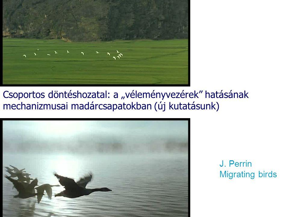 """J. Perrin Migrating birds Csoportos döntéshozatal: a """"véleményvezérek"""" hatásának mechanizmusai madárcsapatokban (új kutatásunk)"""