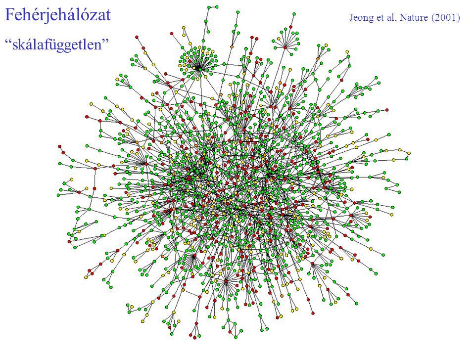 Fehérjehálózat skálafüggetlen Jeong et al, Nature (2001)