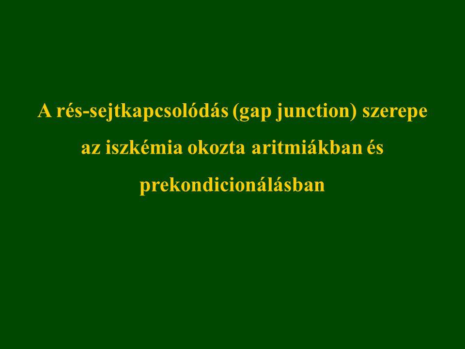 Rés-kapcsolatok felépítése és főbb funkcióik Két fő funkció: Elektromos kapcsolat: ionok áramlása, ingerlékeny szövetekben jelentős (= elektromos szinapszis) Kémiai kapcsolódás: 1 kDa-nál kisebb molekulák kicserélődése, szinte minden szövetre jellemző.