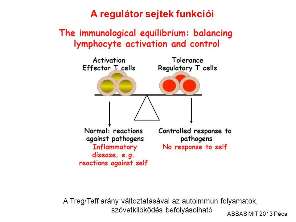 A Treg/Teff arány változtatásával az autoimmun folyamatok, szövetkilökődés befolyásolható A regulátor sejtek funkciói ABBAS MIT 2013 Pécs