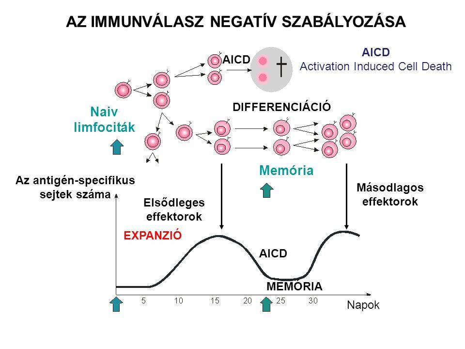 AZ IMMUNVÁLASZ NEGATÍV SZABÁLYOZÁSA Naiv limfociták Az antigén-specifikus sejtek száma Elsődleges effektorok Másodlagos effektorok Memória DIFFERENCIÁCIÓ AICD EXPANZIÓ AICD MEMÓRIA Napok AICD Activation Induced Cell Death