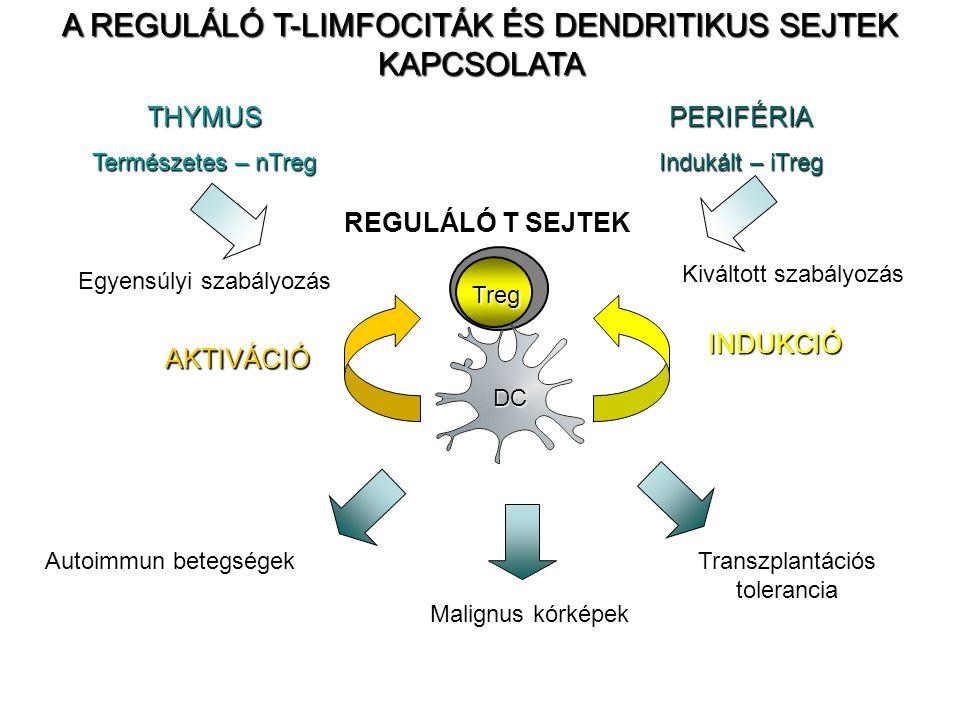 REGULÁLÓ T SEJTEK Egyensúlyi szabályozás THYMUS Természetes – nTreg PERIFÉRIA Indukált – iTreg Kiváltott szabályozás Treg Autoimmun betegségek Transzplantációs tolerancia Malignus kórképek DC AKTIVÁCIÓ INDUKCIÓ A REGULÁLÓ T-LIMFOCITÁK ÉS DENDRITIKUS SEJTEK KAPCSOLATA