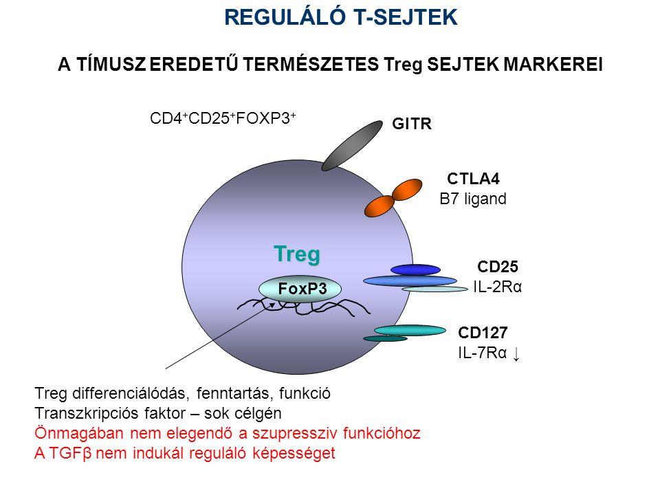 Treg CD25 IL-2Rα CTLA4 B7 ligand GITR A TÍMUSZ EREDETŰ TERMÉSZETES Treg SEJTEK MARKEREI CD127 IL-7Rα ↓ Treg differenciálódás, fenntartás, funkció Transzkripciós faktor – sok célgén Önmagában nem elegendő a szupressziv funkcióhoz A TGFβ nem indukál reguláló képességet FoxP3 CD4 + CD25 + FOXP3 + REGULÁLÓ T-SEJTEK