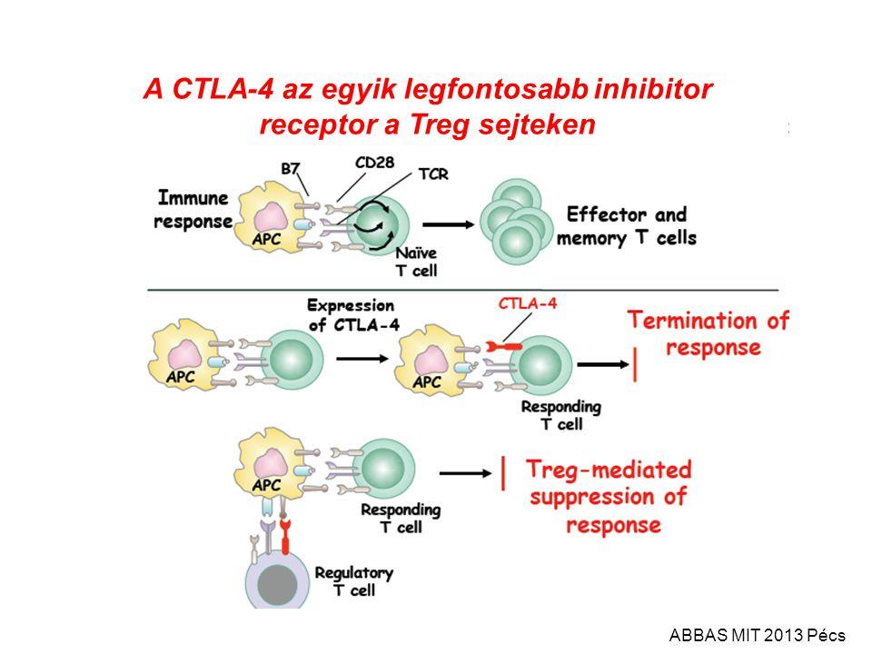 A CTLA-4 az egyik legfontosabb inhibitor receptor a Treg sejteken ABBAS MIT 2013 Pécs