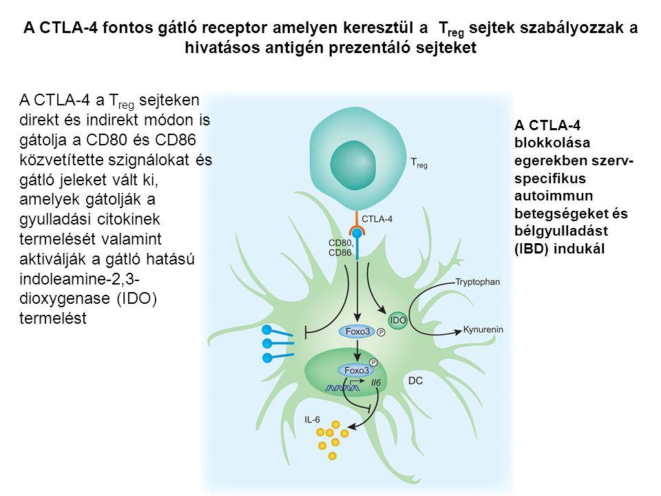 A CTLA-4 a T reg sejteken direkt és indirekt módon is gátolja a CD80 és CD86 közvetítette szignálokat és gátló jeleket vált ki, amelyek gátolják a gyulladási citokinek termelését valamint aktiválják a gátló hatású indoleamine-2,3- dioxygenase (IDO) termelést A CTLA-4 fontos gátló receptor amelyen keresztül a T reg sejtek szabályozzak a hivatásos antigén prezentáló sejteket A CTLA-4 blokkolása egerekben szerv- specifikus autoimmun betegségeket és bélgyulladást (IBD) indukál