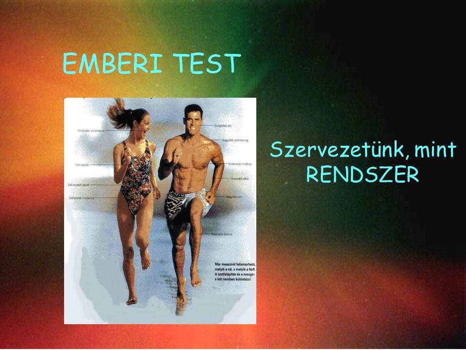 Az emberi test Szervezetünk – mint RENDSZER EMBERI TEST Szervezetünk, mint RENDSZER