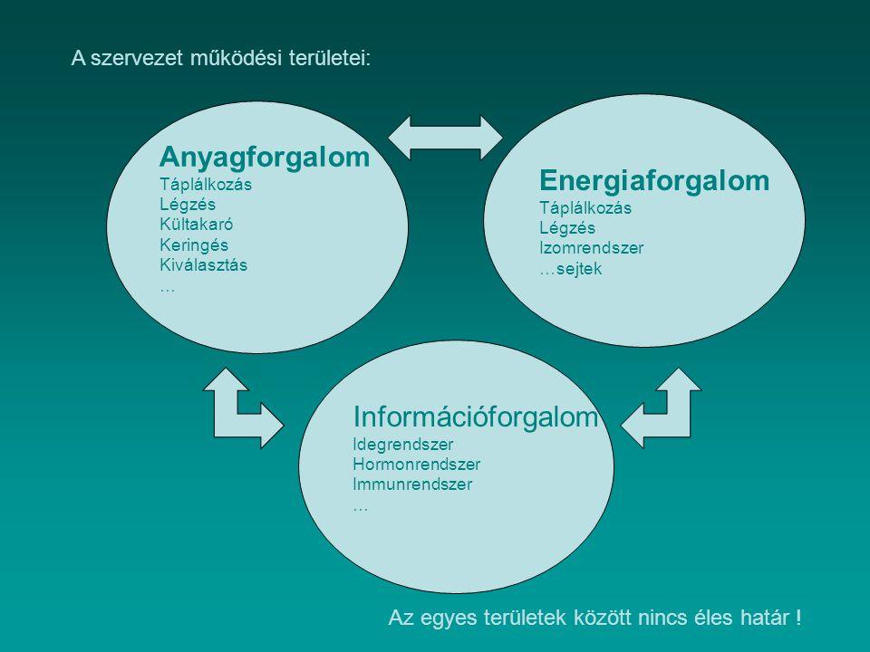 Energiaforgalom Táplálkozás Légzés Izomrendszer …sejtek Információforgalom Idegrendszer Hormonrendszer Immunrendszer … Anyagforgalom Táplálkozás Légzé