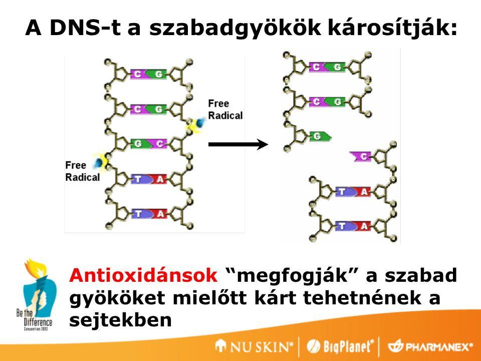"""A DNS-t a szabadgyökök károsítják: Antioxidánsok """"megfogják"""" a szabad gyököket mielőtt kárt tehetnének a sejtekben"""