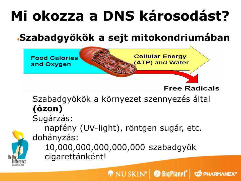 Mi okozza a DNS károsodást?  Szabadgyökök a sejt mitokondriumában Szabadgyökök a környezet szennyezés által (ózon) Sugárzás: napfény (UV-light), rönt