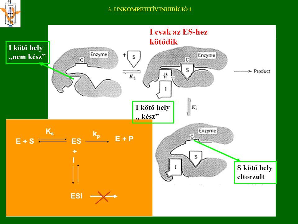 2. NEMKOMPETITÍV INHIBÍCIÓ Az inhibitor a látszólagos V max értéket változtatja meg, K s (illetve K m ) értékét nem befolyásolja.