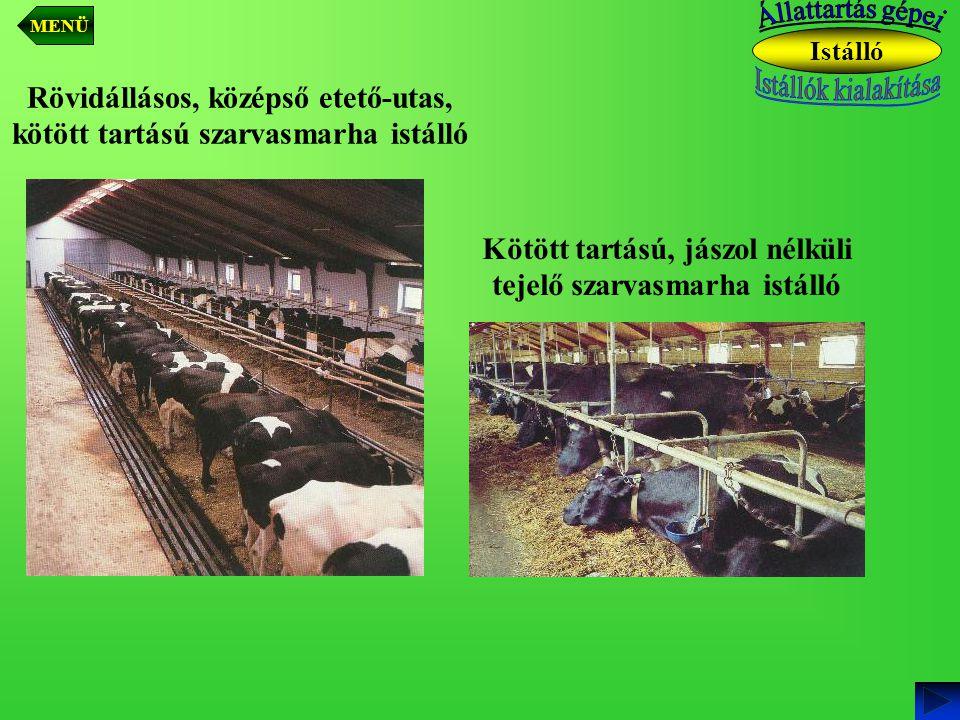 Rövidállásos, középső etető-utas, kötött tartású szarvasmarha istálló Kötött tartású, jászol nélküli tejelő szarvasmarha istálló Istálló MENÜ